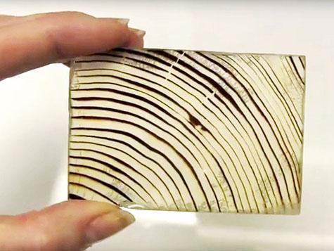 Kết quả hình ảnh cho gỗ trong suốt